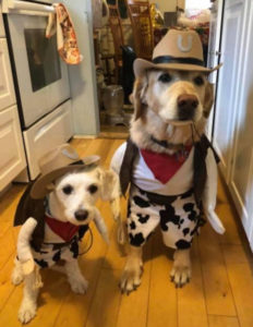 Halloween pet costume contest winners at Willow Farm Pet Services in Vermont